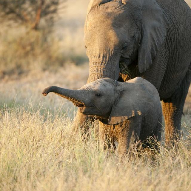 100 Jahre Grand Canyon Nationalpark