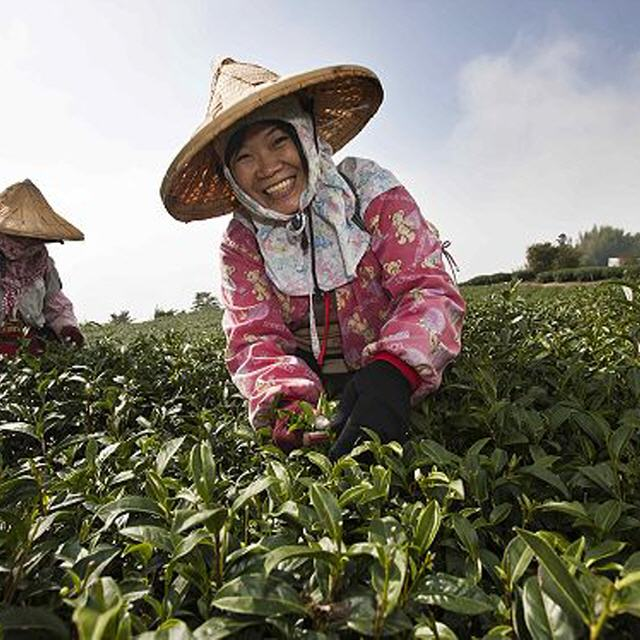 Curaçao North Sea Jazz Festival 2012